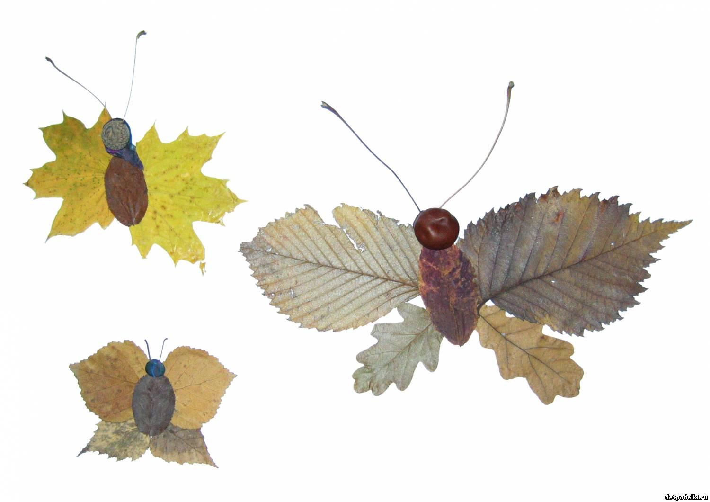 Гербарии из листьев своими руками фото на тему осень